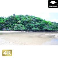 2022020 ■ 石垣島 吹通川ヒルギ群落