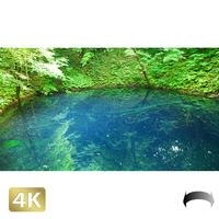 1036006 ■ 白神山地 十二湖 青池