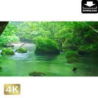 2035078 ■ 奥入瀬渓流