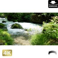 2035036 ■ 奥入瀬渓流