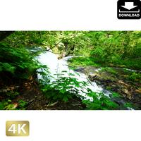 2035105 ■ 奥入瀬渓流 銚子大滝