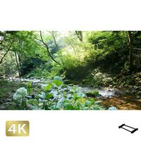 1004029 ■ 秋川渓谷 南秋川