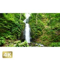 1035061 ■ 奥入瀬渓流 雲井の滝