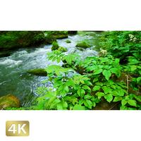 1035089 ■ 奥入瀬渓流 渓流