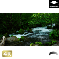 2035016 ■ 奥入瀬渓流 阿修羅の流れ
