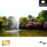 2033001 ■ 柿田川 噴水