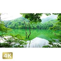 1036001 ■ 白神山地 十二湖 鶏頭場の池