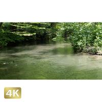 1035002 ■ 奥入瀬渓流 渓流