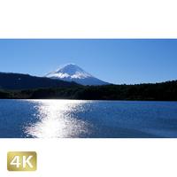 1018009 ■ 富士山 西湖