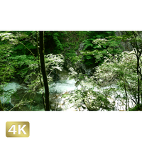 1010011 ■ 西沢渓谷 恋糸の滝