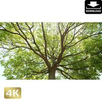 2034005 ■ 渡良瀬遊水池 樹木