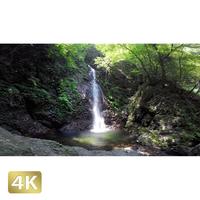 104010 ■ 秋川渓谷 払沢の滝