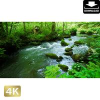 2035087 ■ 奥入瀬渓流 渓流