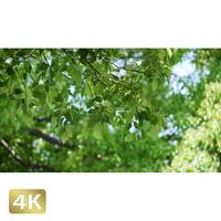1034006 ■ 渡良瀬遊水池 樹木