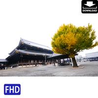 4043107 ■ 京都 紅葉 東本願寺