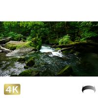 1035083 ■ 奥入瀬渓流 阿修羅の流れ