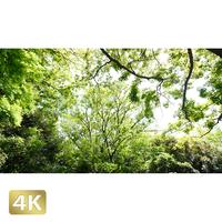 1033032 ■ 柿田川 清流