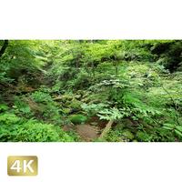 1037006 ■ 御岳山 ロックガーデン