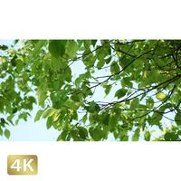 1034007 ■ 渡良瀬遊水池 樹木