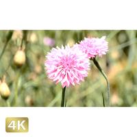 1024024 ■ 花畑 小花