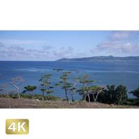 1038023 ■ 石垣島 名蔵湾