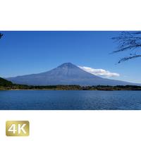 1015025 ■ 富士山 紅葉