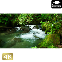 2035085 ■ 奥入瀬渓流 阿修羅の流れ