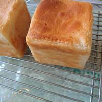 【送料無料】グルテンフリー 米粉食パン3個セット
