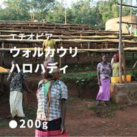 エチオピア  イルガチェフェ ウォルカウリ ハロハディ / 浅煎り (High Roast)