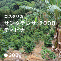 コスタリカ サンタテレサ 2000 ティピカ / 浅煎り (High Roast)
