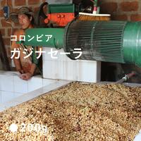 コロンビア ガジナセーラ/ 中煎り (City Roast)