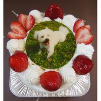 写真ケーキ(生クリームデコレーション5号)