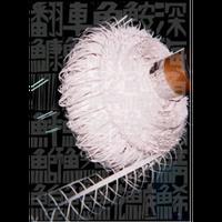 深海魚 前田瑠璃