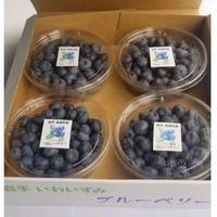 【期間限定  7月末まで】岩手県岩泉町・したみち農園さんの無農薬ブルーベリー1kg