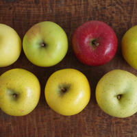 岩手イーハトーブのりんご農園から。希少種から高級品種まで詰め合わせてお届け(3〜7種類)  10Kg