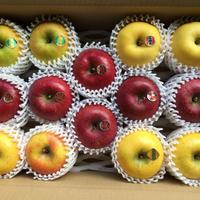 岩手イーハトーブのりんご農園から。希少種から高級品種まで詰め合わせてお届け(1〜5種類) 5Kg