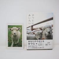 【古本】B2_85 ひつじにあいたい /山と渓谷社 ひつじ牧場まるごとガイド