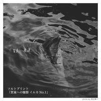 質量への憧憬 イルカ【ソルトプリント】