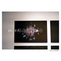 「質量への憧憬」展示作品:「散花」
