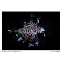 質量への憧憬:散花(Mサイズ)