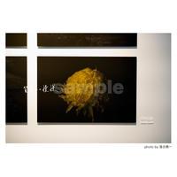 「質量への憧憬」展示作品:「花」