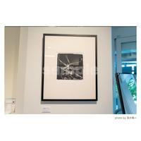 「燐光する霊性」展示作品:「光を纏う枯れ木」プラチナプリント