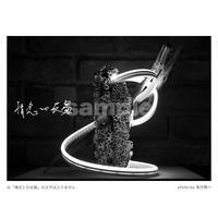 「情念との反芻」展示作品:「光を纏う海洋プラスチック」プラチナプリント