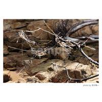 「燐光する霊性」展示作品:「枯れ木と霊性」