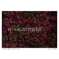 質量への憧憬:花と枯葉(Mサイズ)