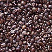 自家焙煎コーヒー豆 マラウイ ポカヒルズ・チャカカ フルシティーロースト