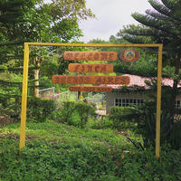 ニカラグア ブエノス・アイレス農園 マラカトゥーラ種 アナエロビック・ナチュラル[250g]