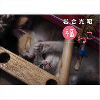 岩合光昭 福ねこ2020 カレンダー