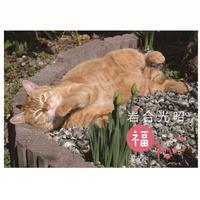 岩合光昭 福ねこ2021 カレンダー