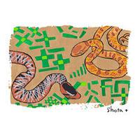 キャンバスアート(L)タイワンセダカヘビ